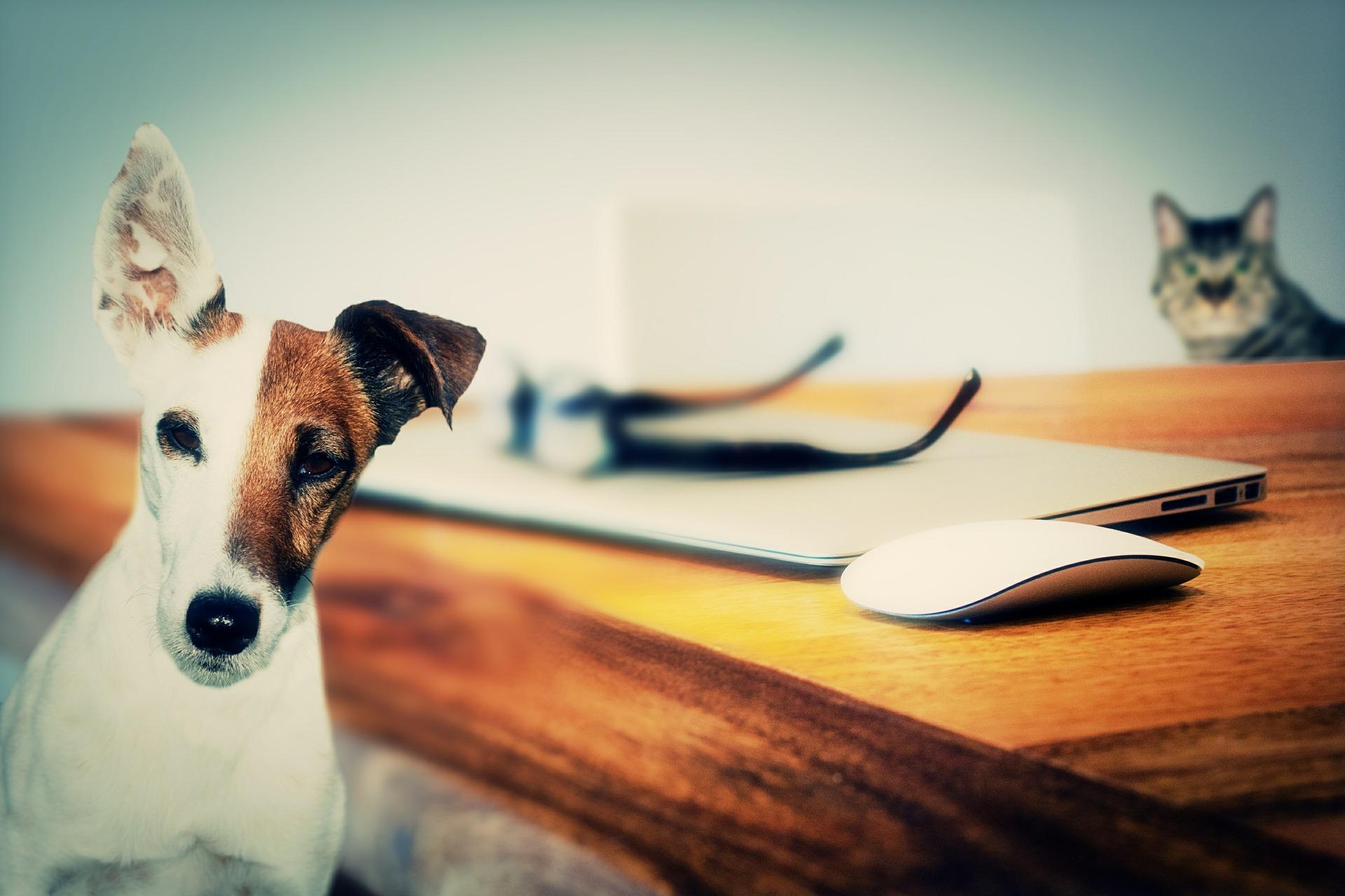 Tierarztpraxis Kohl